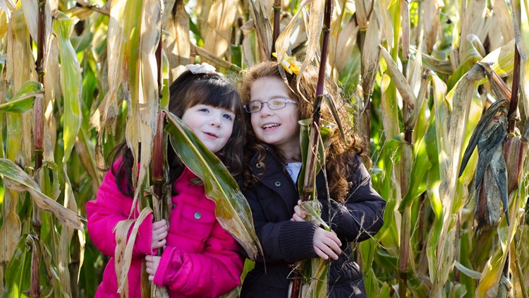 two girls hide in the corn stalks at the orchard corn maze