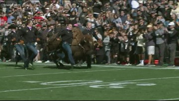Ralphie to retire after 12 seasons with CU