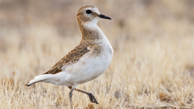 This teeny town in Colorado wants you to come search for some super rare birds