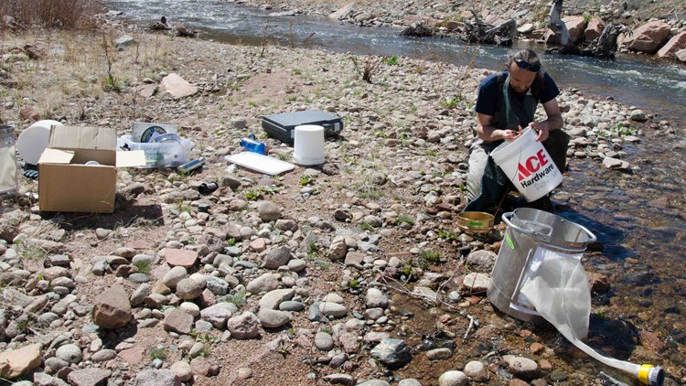 'Several hundred' fish collected as evidence after fuel spill near Lyons