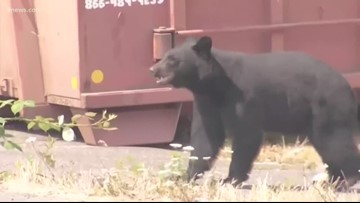 Proposed ordinance would require bear-resistant trash cans west of I-25 in Colorado Springs