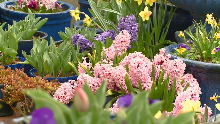 Proctor's Garden: How to prepare your lawn for spring