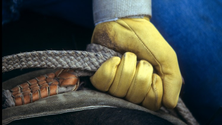 Glove of rodeo cowboy gripping rope on horse or bull