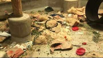 All that trash you see in the Denver Zoo's orangutan exhibit is actually supposed to be there