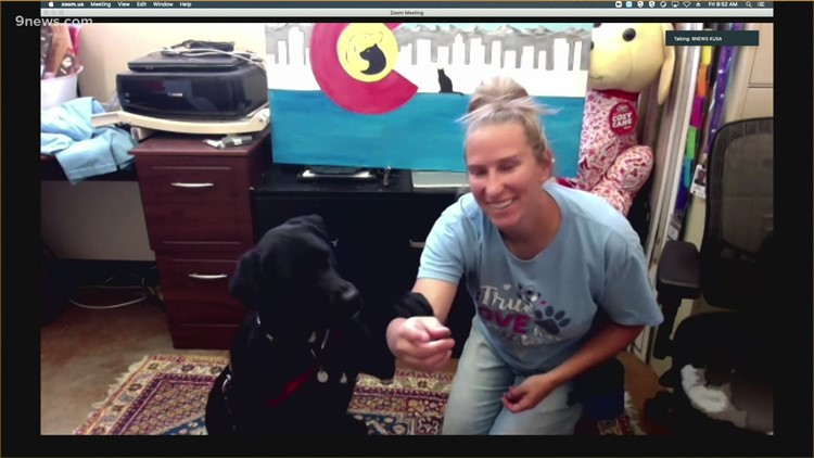 Petline 9: Oreo, 3, is a black lab looking for a new home!