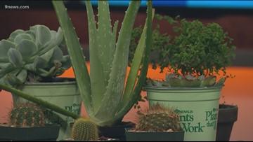 Proctor's Garden: Make a new resolution inspired by gardening