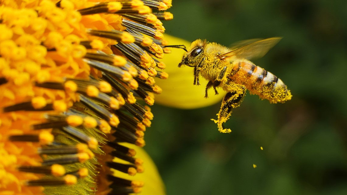 Birds, bees and bugs: Prepare your garden for spring