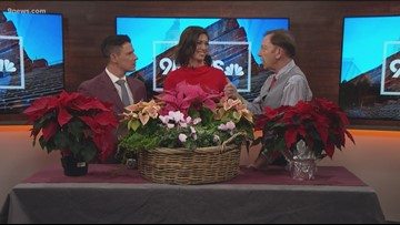 Proctor's Garden: How not to kill your poinsettia