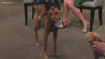 Petline9: Edith is looking for a quiet and relaxed home where she can play with her toys