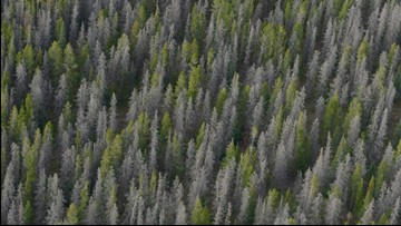 Forest Service rescinds chain saw use in Colorado wilderness
