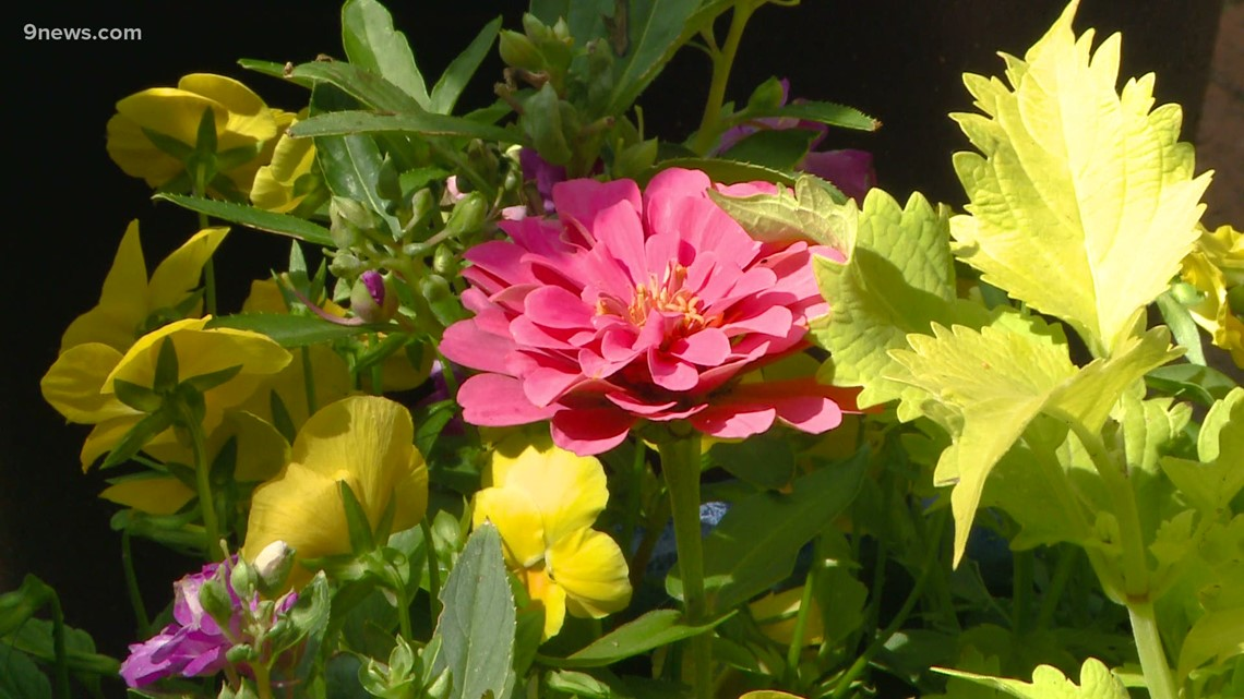 Proctor's Garden: Rain triggers floral fireworks