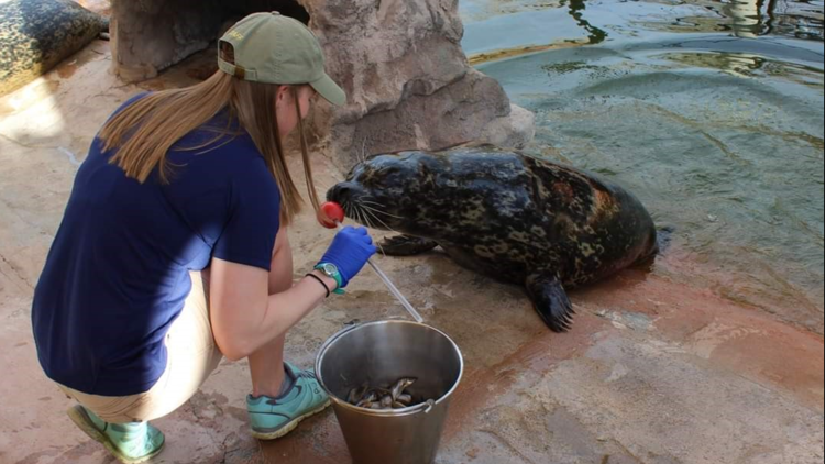'Beloved' Denver Zoo seal euthanized after declining health