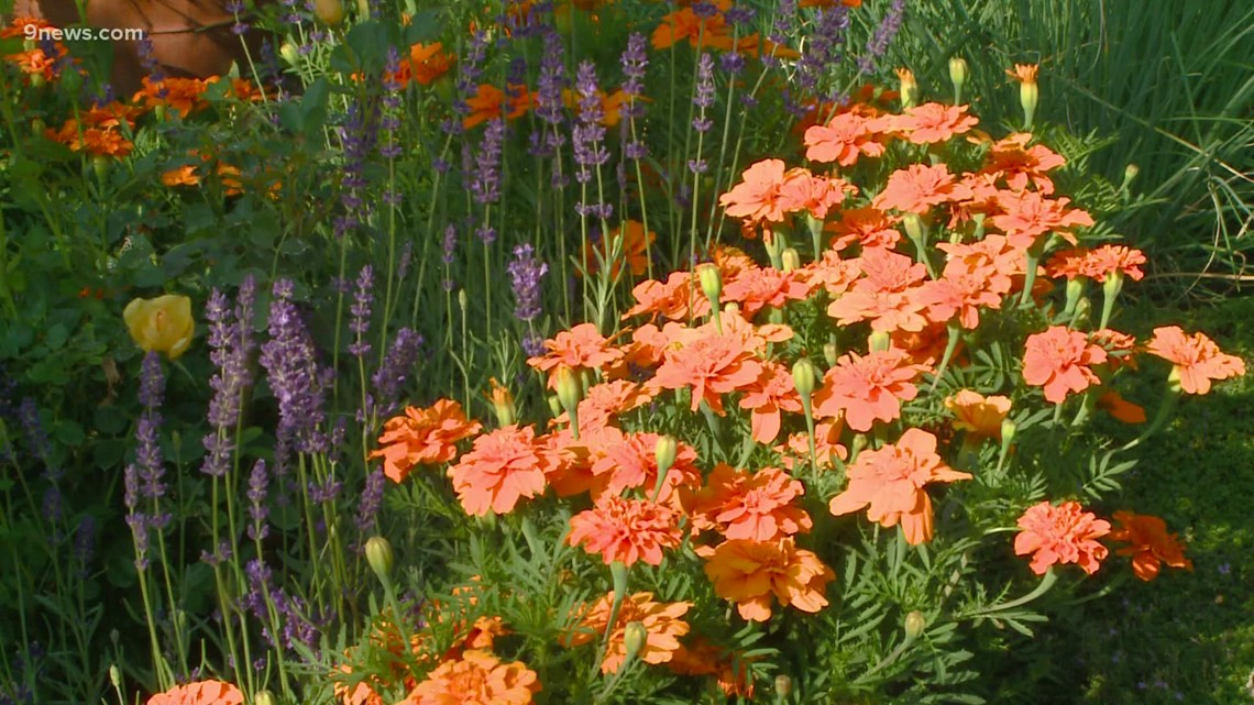 Proctor's Garden: Keep plants producing into late summer