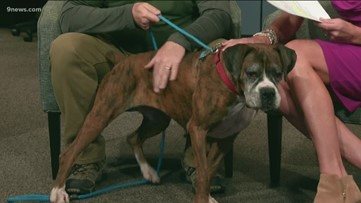 Petline9: Choco is 10 and a super spunky girl for her age