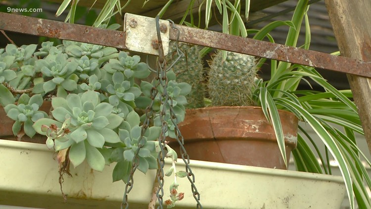 Proctor's Garden: Quirky and fun gardening projects