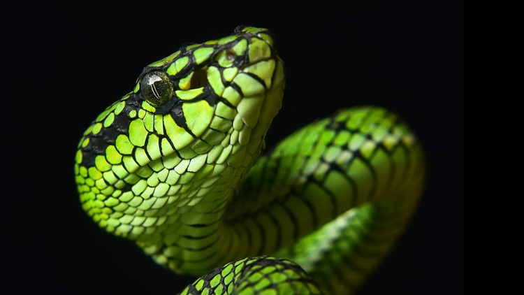 lizard snake reptile thinkstock