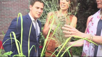 Proctor's Garden: Adding scents