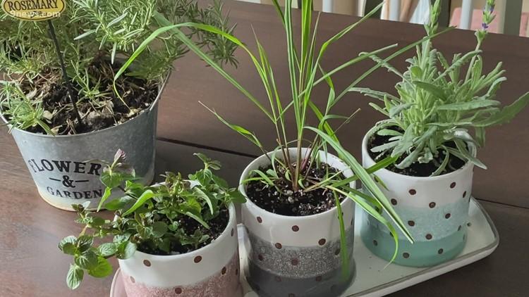 Proctor's Garden: Tips for successful indoor gardening