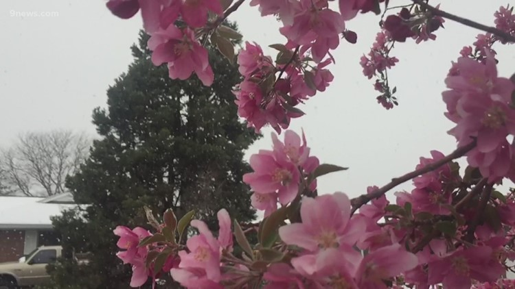 Spring storms could impact your trees, garden