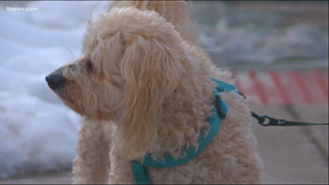 Salty sidewalks help with the snow and ice, but they can harm your pets