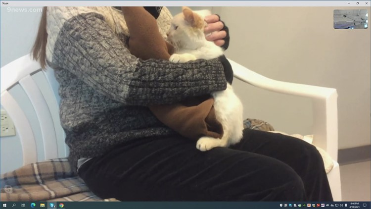 Petline 9: Cat named Angelo needs a home