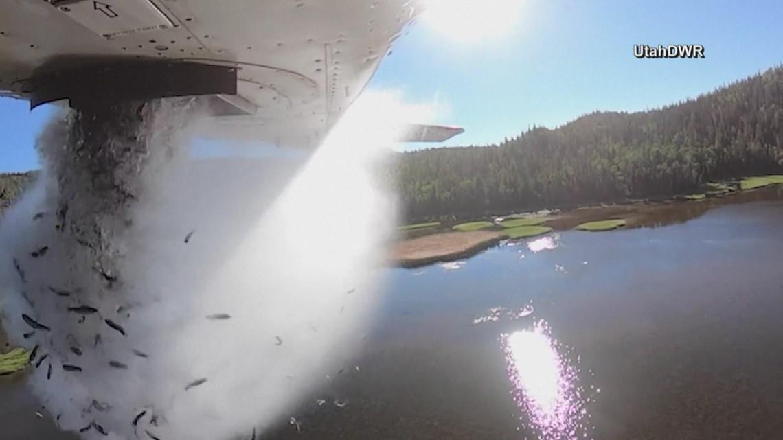 Fish are flying in Utah
