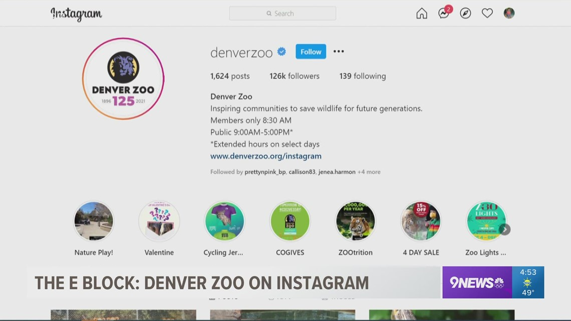If you aren't following the Denver Zoo on Instagram, you're really missing out