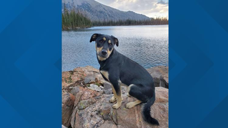 Dog goes missing in mountains for five days, then reunites with owner