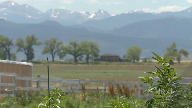 Hemp farmers in Colorado applaud Senate farm bill that