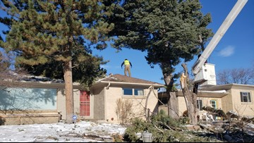 Downed trees from March blizzard mean busy days for tree trimmers