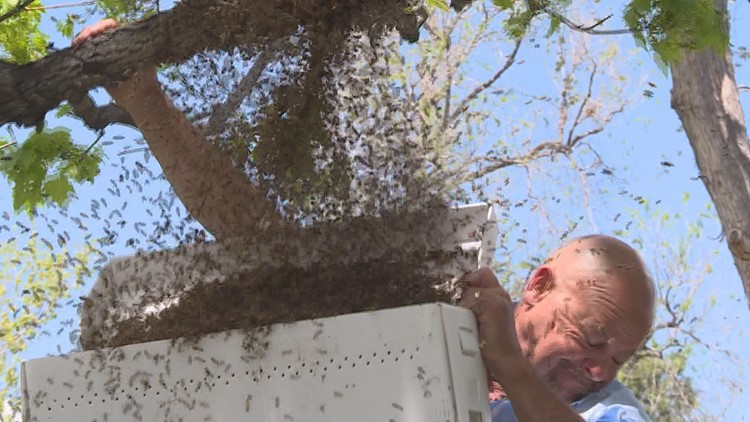 Bee swarm season