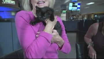 Petline9: Meet Glimmer, an adorable 11-week-old kitten