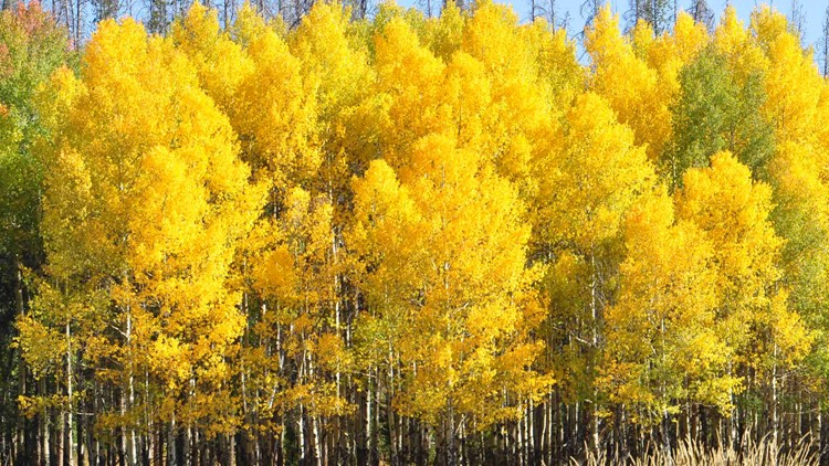 9 hikes where you can see fall colors in Colorado