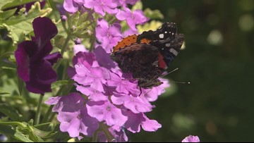 Tips on how to provide for pollinators