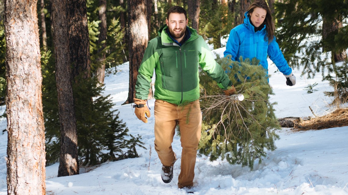 How to get a Christmas tree cutting permit at Golden Gate State Park