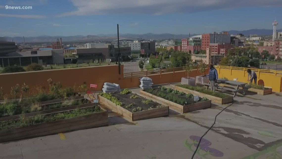 Expect to see more rooftop gardens in downtown Denver