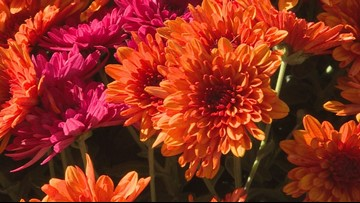 Despite cold weather, add color to your garden