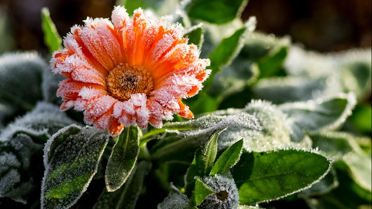 Here's how to prepare your garden for the first frost