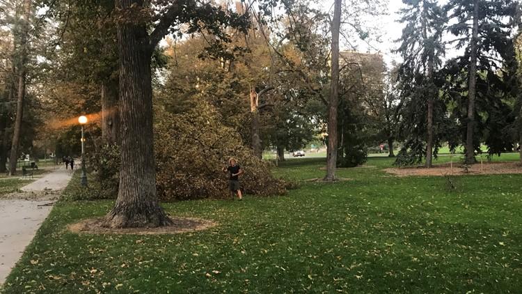 Tree at Cheesman Park