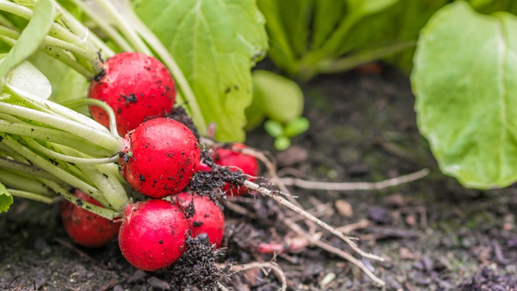 Now's the time to start planting your fall garden