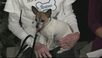 Petline9: Ty the chihuahua is quite the gentleman