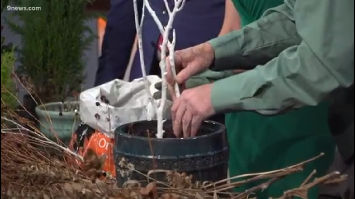 Proctor's Garden: Alternatives to getting a live Christmas tree for your home