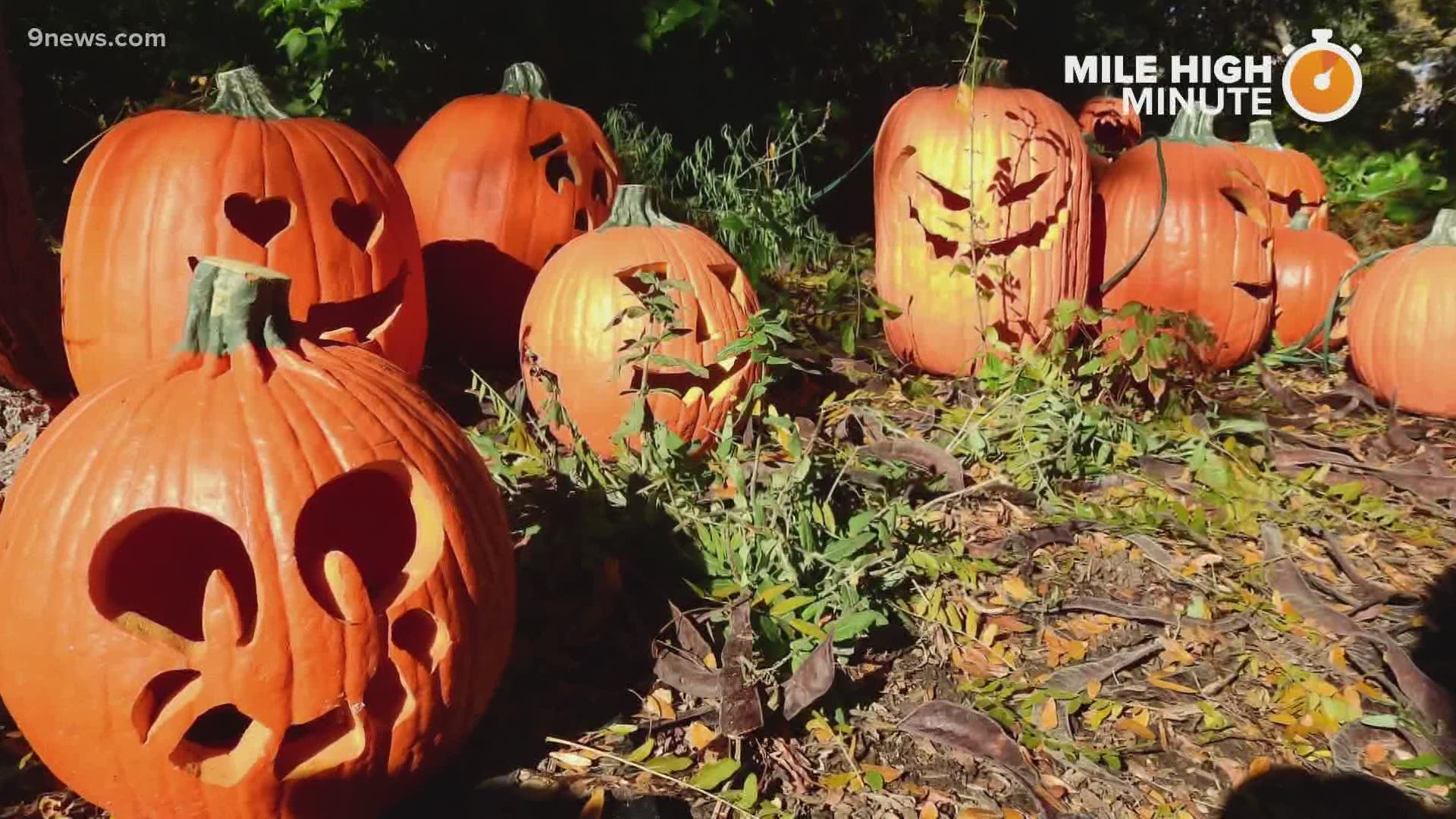 Halloween Weather In Denver 2020 Denver Zoo 'Boo at the Zoo' is back in 2020 with some changes