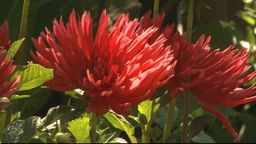 Proctor's Garden: Now is the time to groom your garden