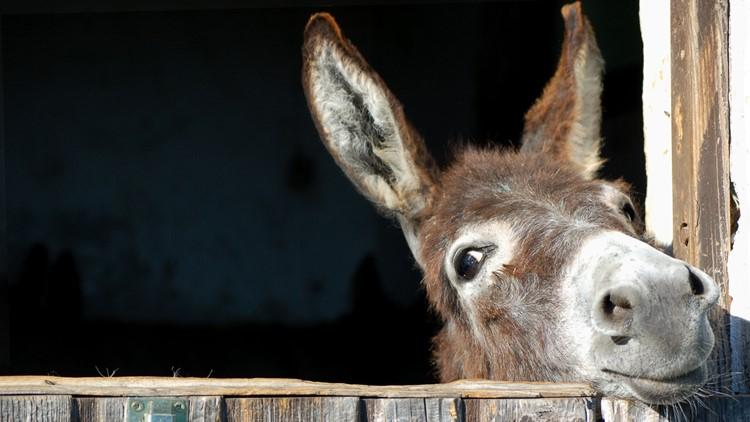 donkey donkeys burro burros mile