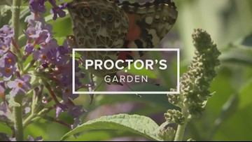 Proctor's Garden: Grooming your lush summer garden