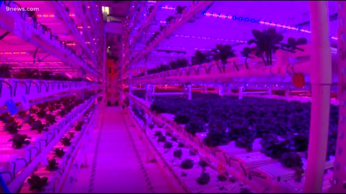 Infinite Harvest grows lettuce indoors, avoids Mother Nature's misfortunes
