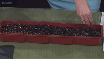 Proctor's Garden: Microgreens are fast and easy to grow, and pack a nutritional punch