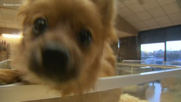 Bill introduced in the state legislature looks to crack down on puppy mills