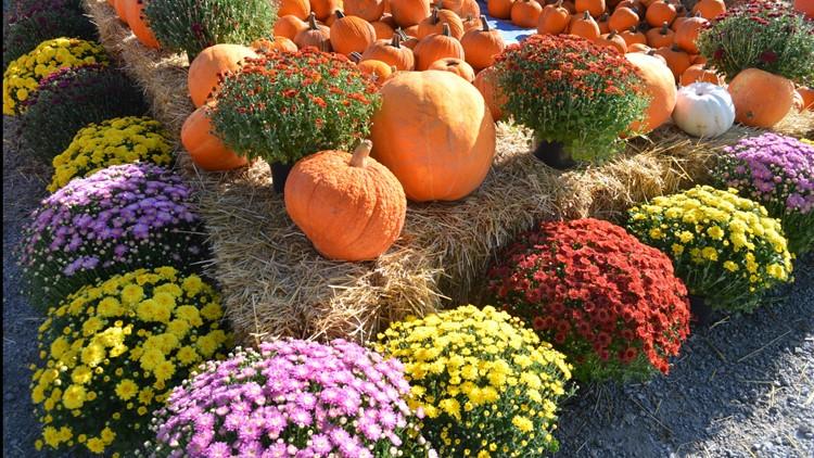 Proctor's Garden: Give your patio an autumn makeover